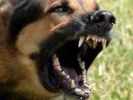 Cave canem ou ces chiens de journalistes ! dans Interventions de l'auteur chien-aboyant